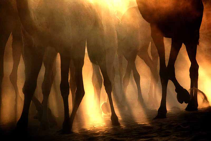 Pushkar Camel Fair 2