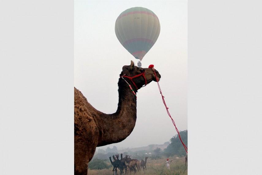 Pushkar Camel Fair 9